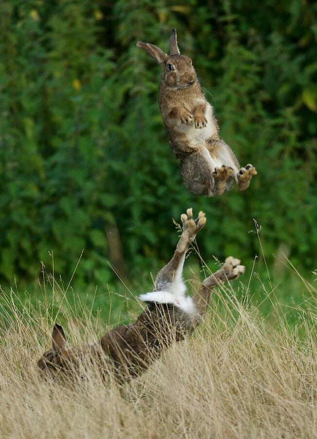 Картинки по запросу rabbit in the air