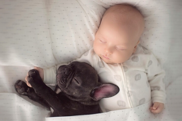baby-dog-friendship-french-bulldog-ivette-ivens-3