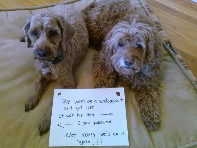 RudiLeo-dog-shaming-637x477