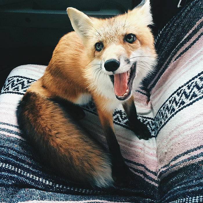 juniper-fox-happiest-instagram-36