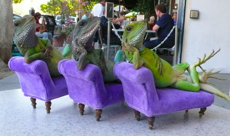 _lizards_at_village_pizza_by_henry_lizardlover