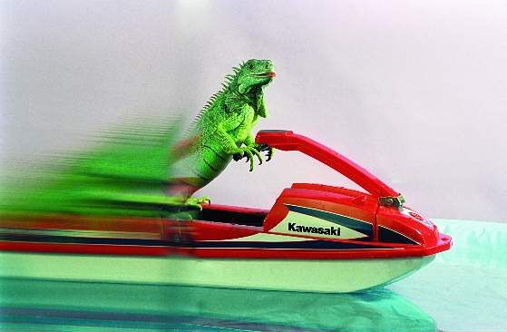 cecil_water_ski_by_henry_lizardlover