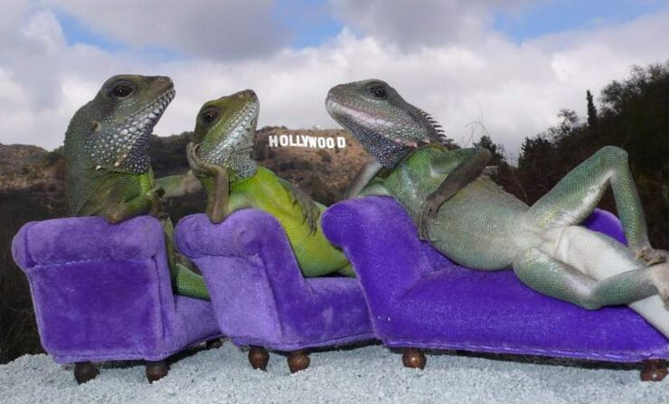 henry_lizardlover_3_hollywood_lizards