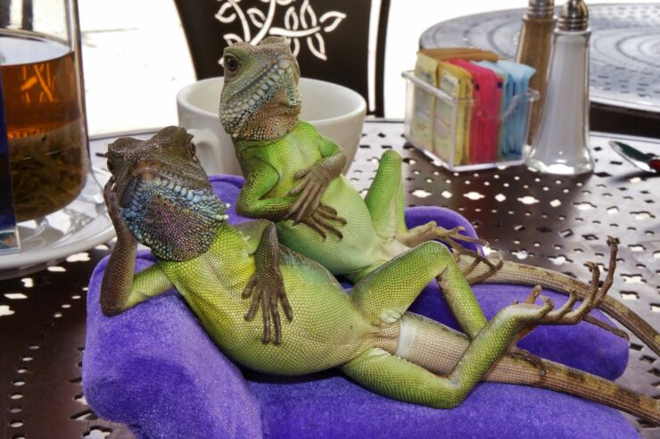 henry_lizardlover_urth_cafe_lunch_with_lizards_dsc01005_web_reduced