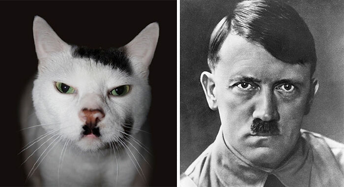 celebrity-look-alikes-animals-53__700