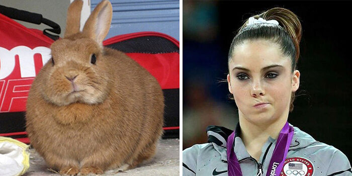 celebrity-look-alikes-animals-69__700