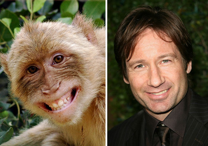 celebrity-look-alikes-animals-421__700