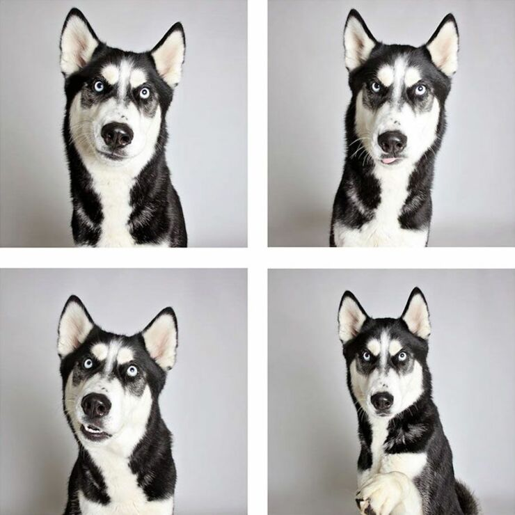 adopt-shelter-dogs-photobooth-humane-society__880