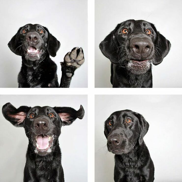 adopt-shelter-dogs-photobooth-humane-society-28__880