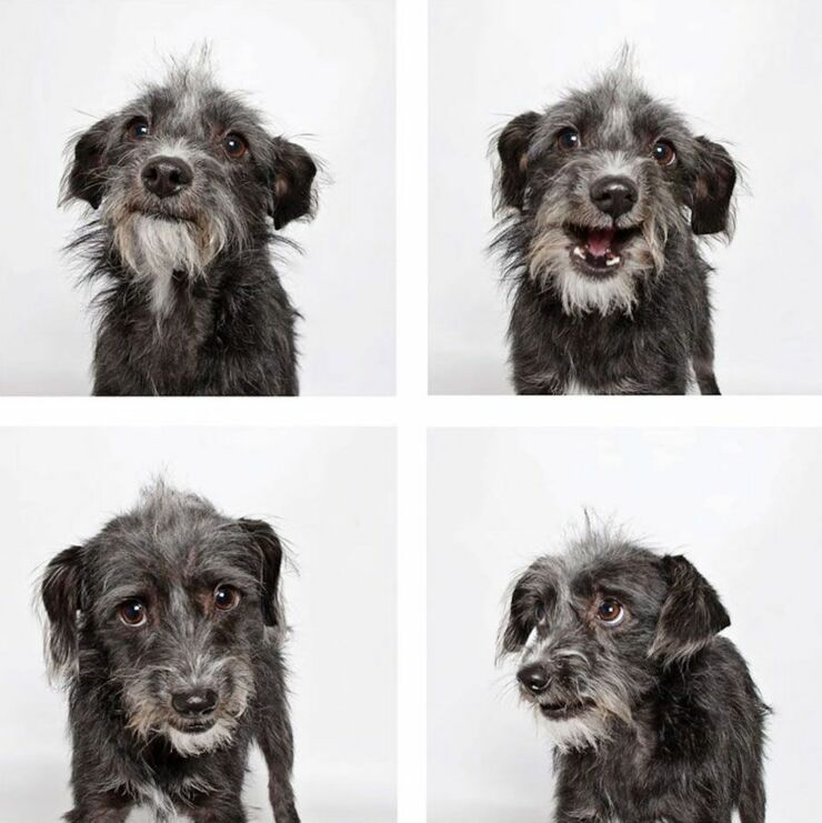 adopt-shelter-dogs-photobooth-humane-society-38__880