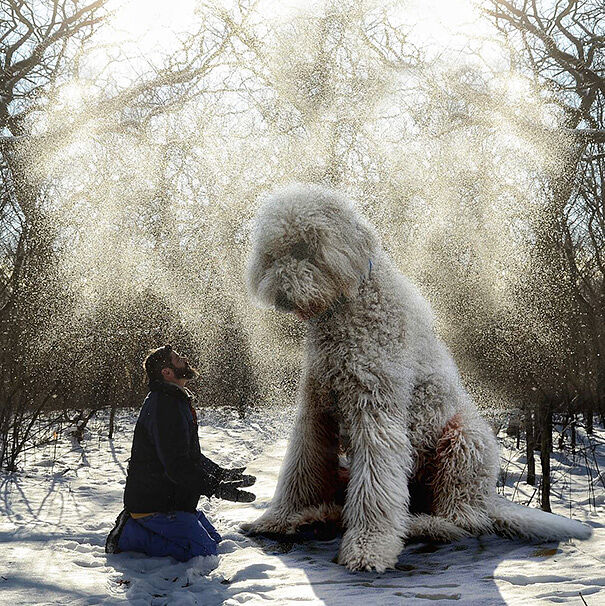 giant-dog-photoshop-adventures