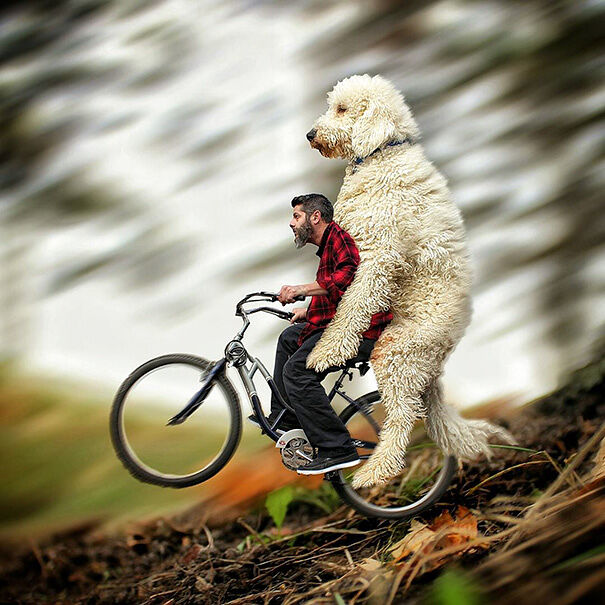 giant-dog-photoshop-adventures3