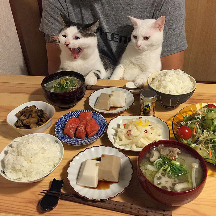 cats-watching-people-eat-naomiuno-1