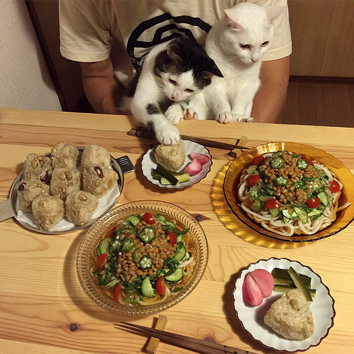 cats-watching-people-eat-naomiuno-19