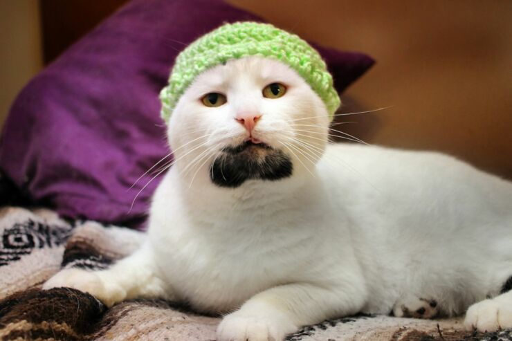 PAY-hipster-cat (2)