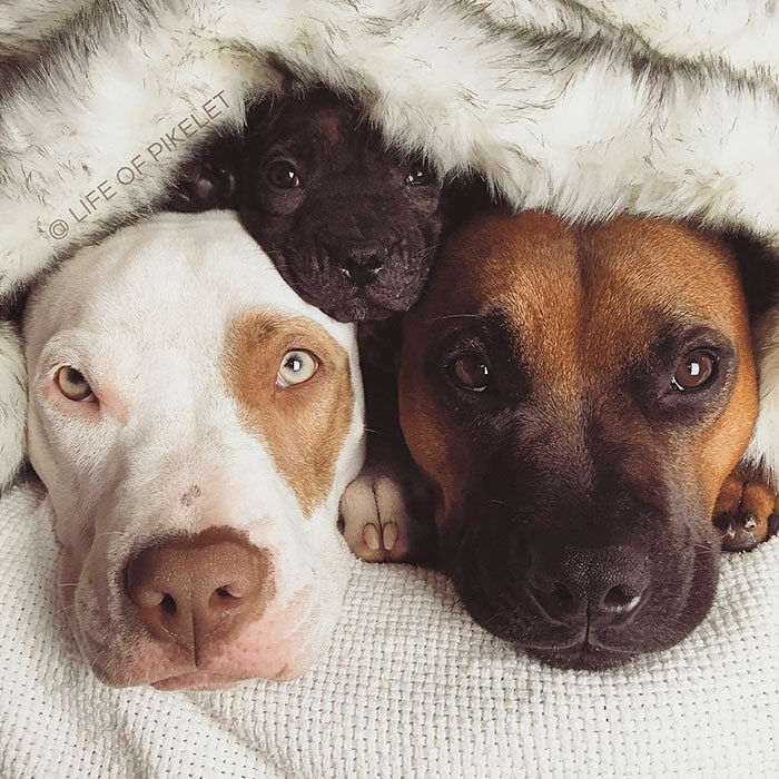 rescue-dogs-new-puppy-best-friends-potato-life-of-pikelet-a21