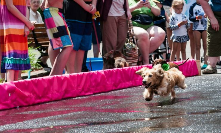 Annual Wiener Dog 100 Race Saw Over 50 Dogs Battle It Out