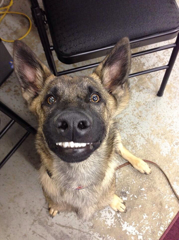 50 Adorable Smiling Animals That Are Guaranteed To Put A Smile On Your Face Today