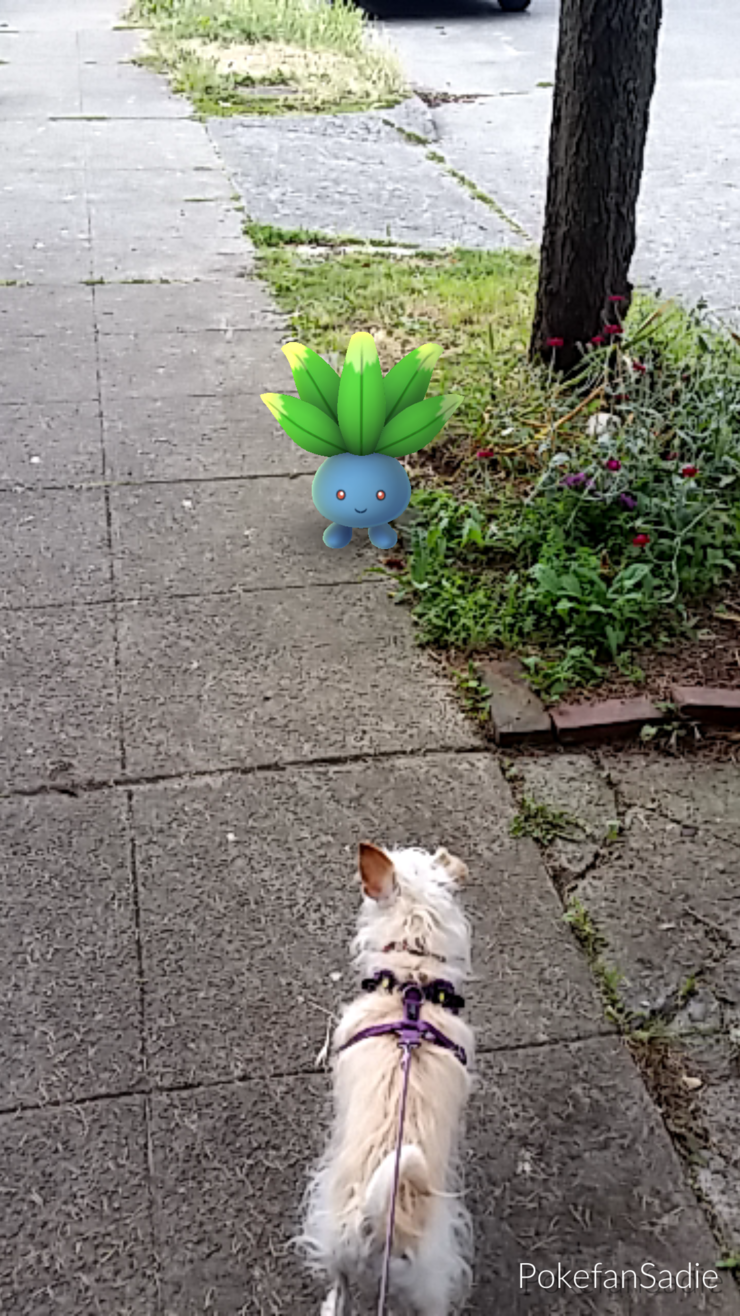 terrier-oddish-pokemon-go-walk