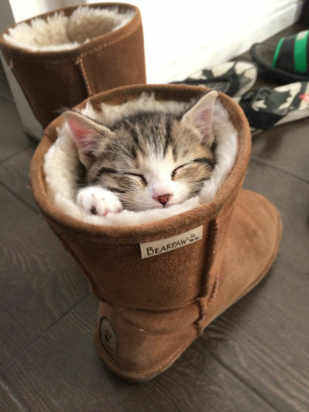 As If You Needed It, Here's 62 Examples That Show That Cats Can Sleep Pretty Much Anywhere.