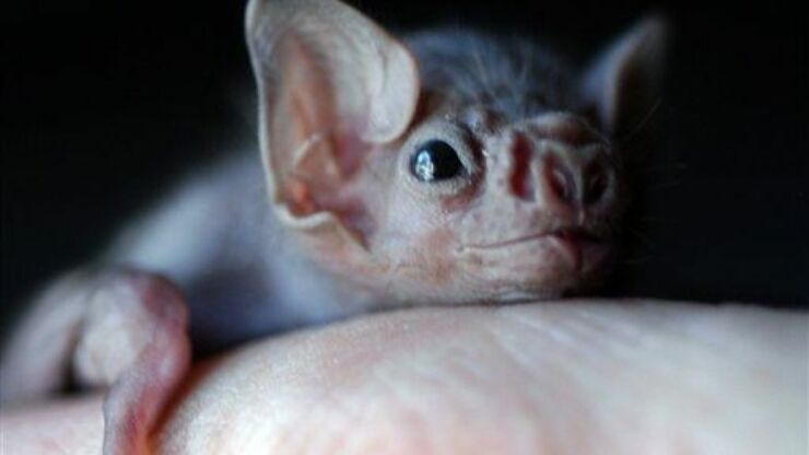 Vampire Bats In Brazil Have Started To Feed On Human Blood, Scientists Find-1