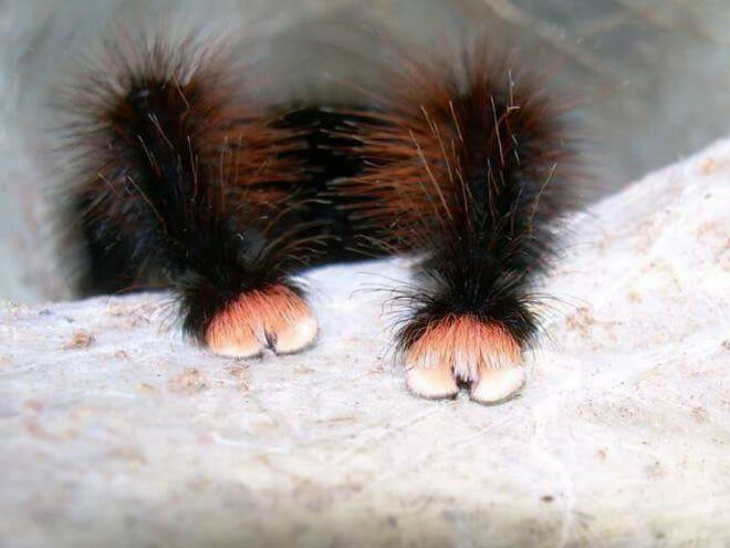 cute spider paws 03.