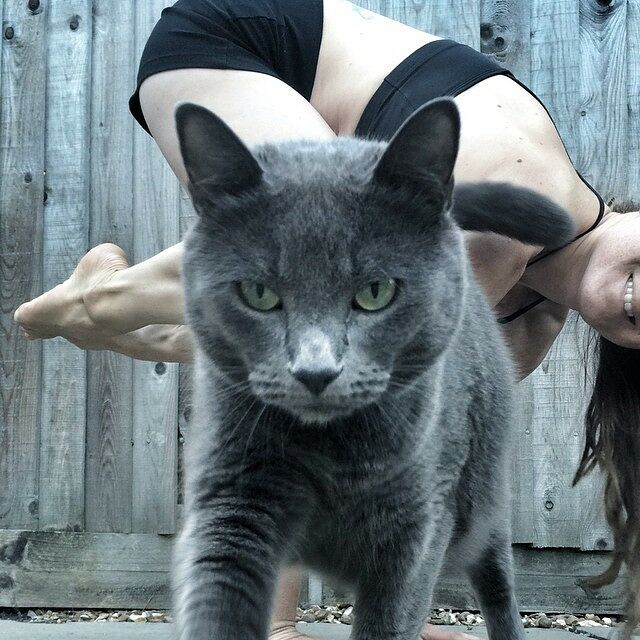 Imagine What The Planet Would Be Like If We Didn't Have Photobombing Cats