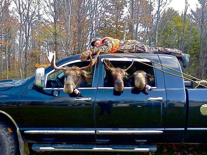 Moose-got-the-beer-L