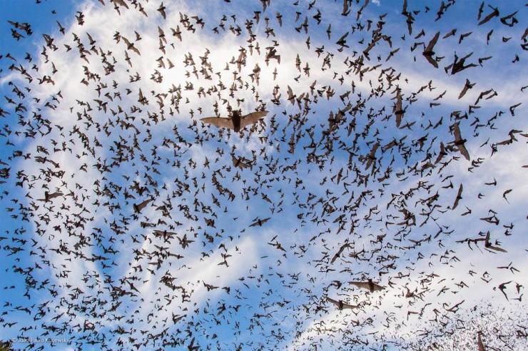 'Bat Festival' by João Paulo Krajewski