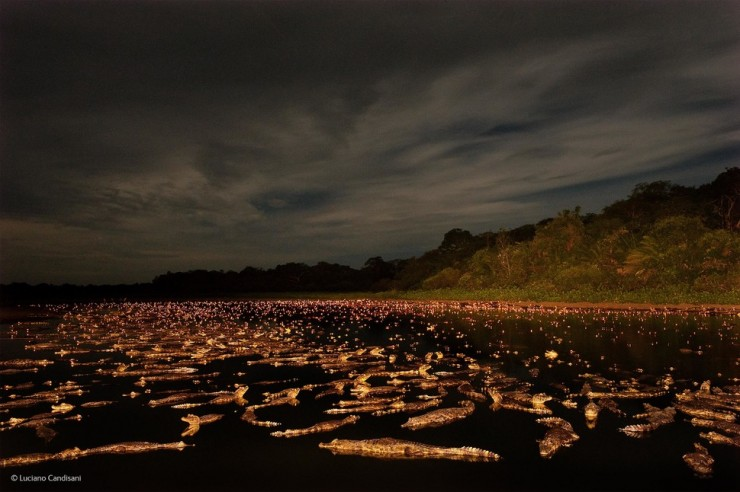 'Caiman Night' by Luciano Candisani