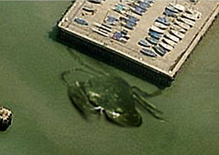 Crabzilla the giant crab - 03.