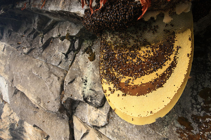 Mad Honey Hunters Of Nepal - 01.