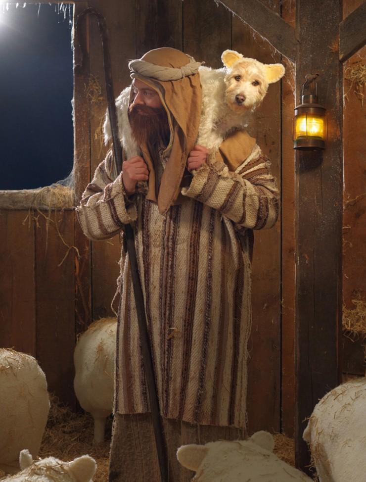 Sheep dog 2010