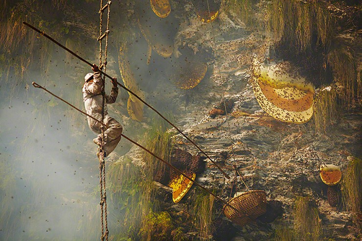 Mad Honey Hunters Of Nepal - 10.