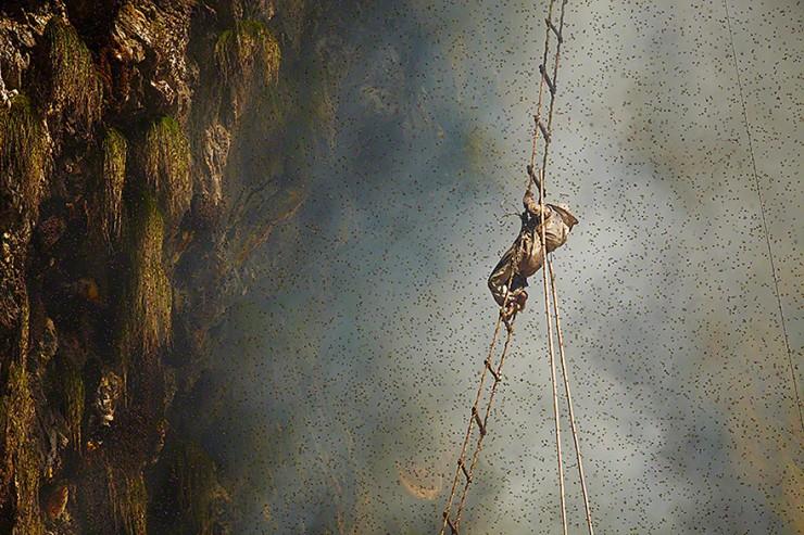 Mad Honey Hunters Of Nepal - 02.