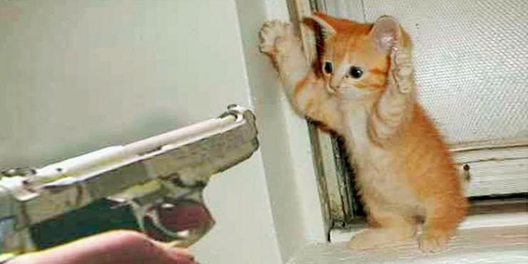 cat_gun