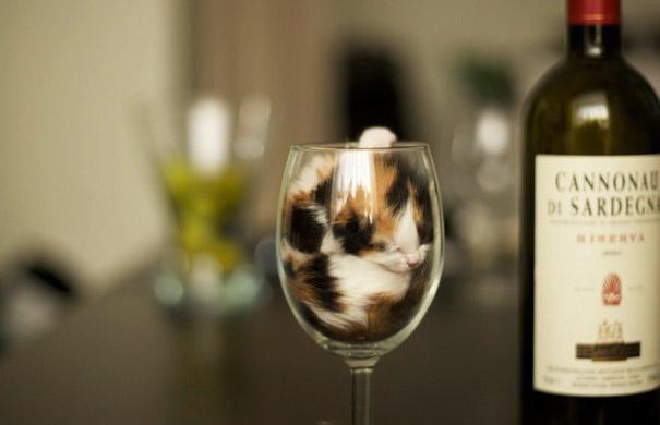 Cats-ar-liquid-01a