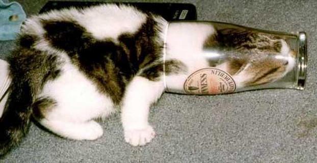 Cats-ar-liquid-02a