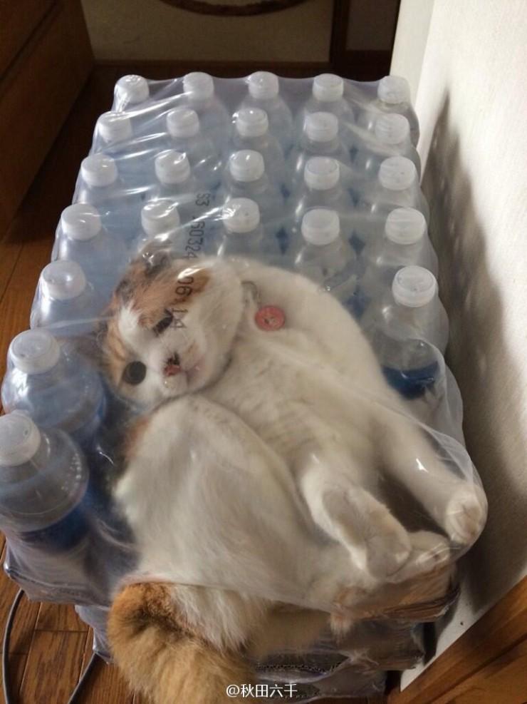 Cats-ar-liquid-03a
