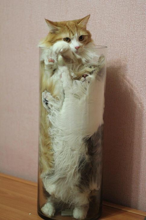 Cats-ar-liquid-04
