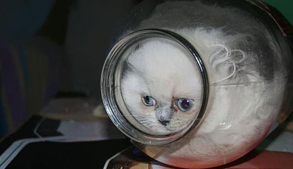 Cats-ar-liquid-07a