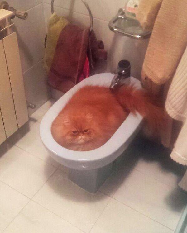 Cats-ar-liquid-08