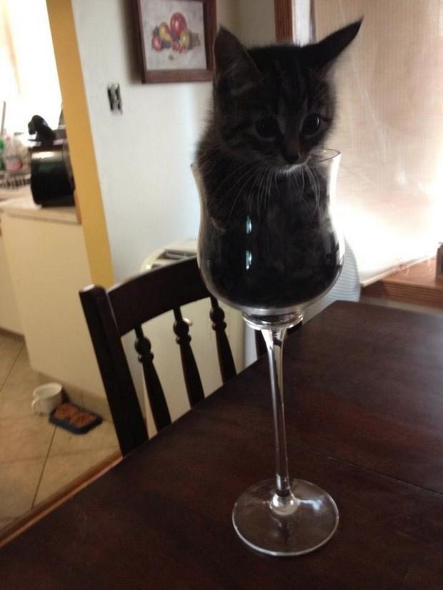 Cats-ar-liquid-10