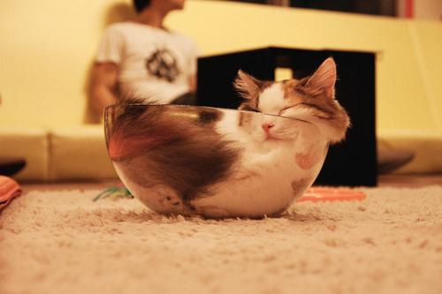 Cats-ar-liquid-11a