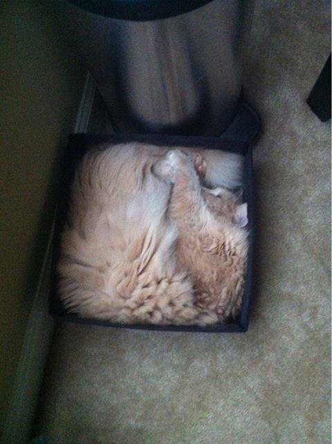 Cats-ar-liquid-14