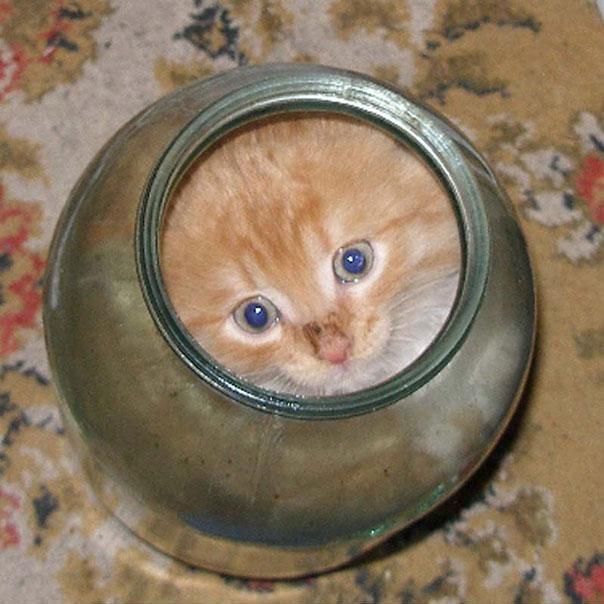 Cats-ar-liquid-15