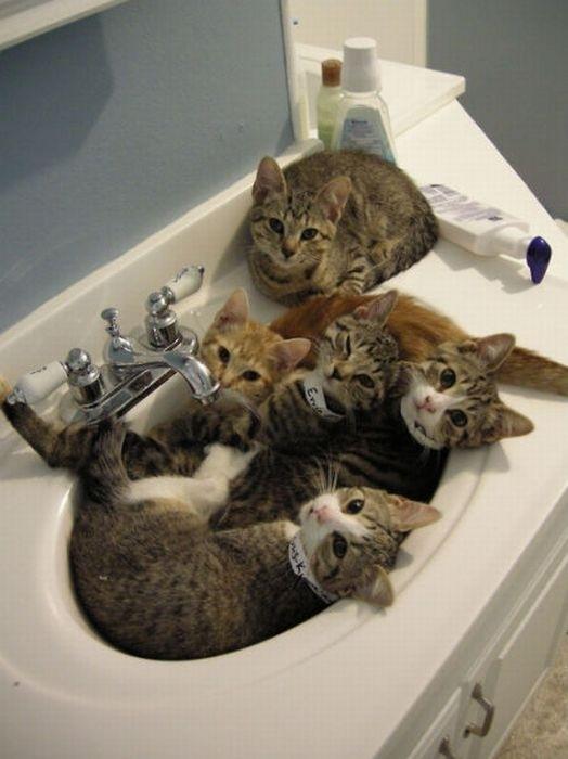 Cats-ar-liquid-16