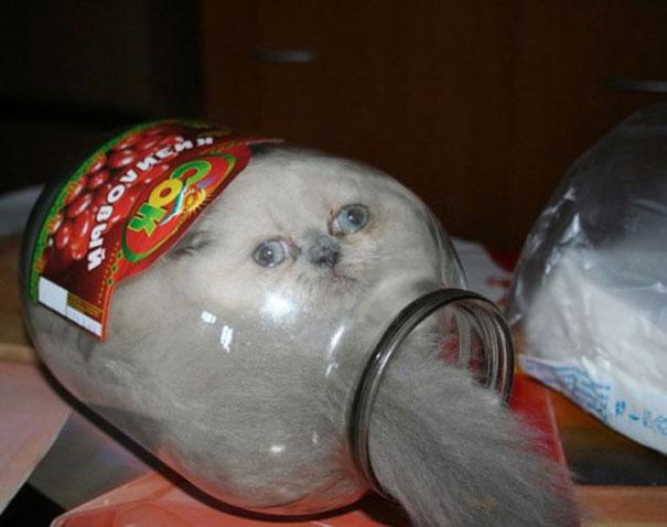 Cats-ar-liquid-17