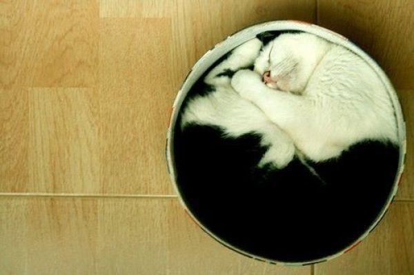 Cats-ar-liquid-19