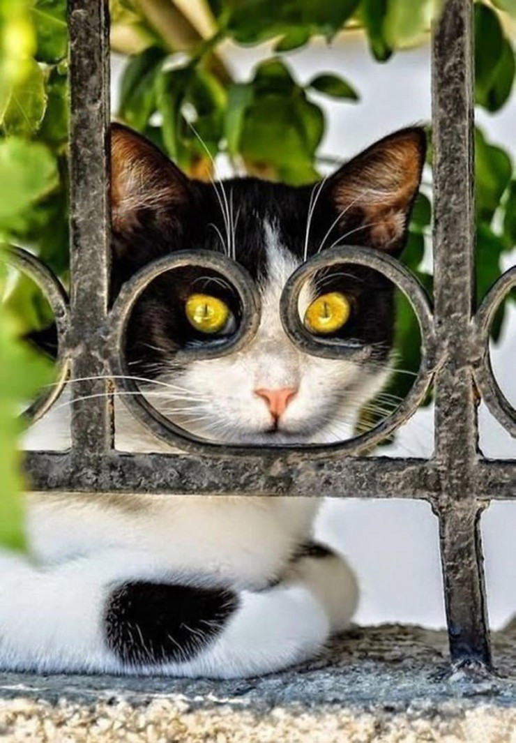 cat-pictures-taken-right-time-3